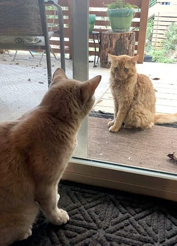 Two orange cats look at each other through a sliding glass porch door.