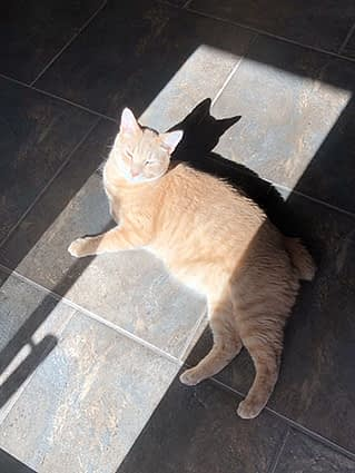 An orange cat lays directly in a sunbeam on the floor