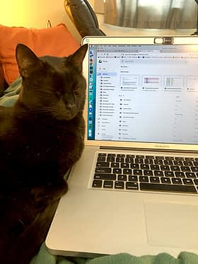 A black cat sits with eyes closed next to an open laptop computer