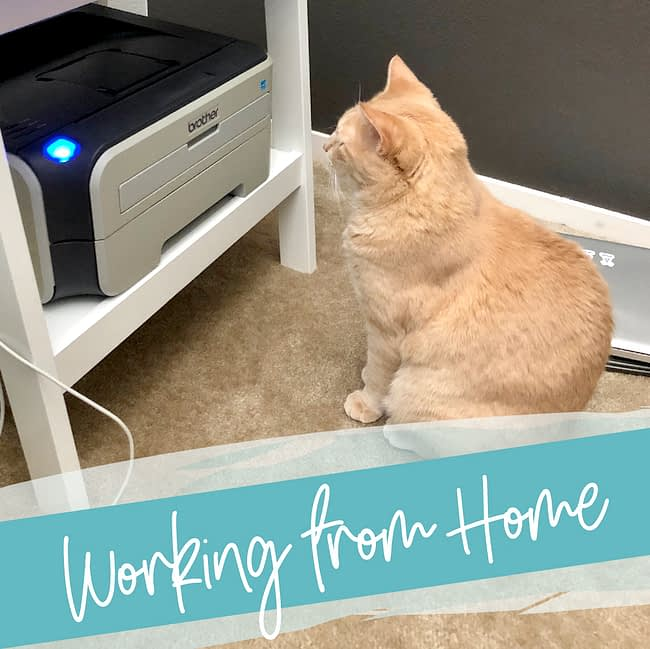 Working from Home - a cat sits patiently in front of a printer
