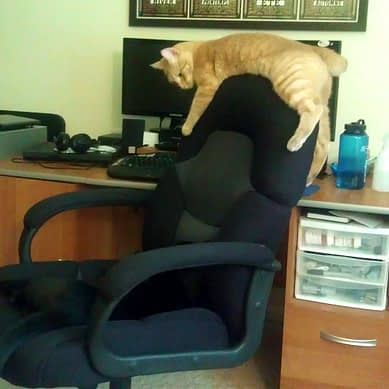 An orange cat drapes himself over the back of an office chair.